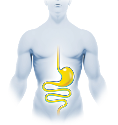 digestion-blue-line