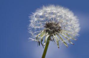 Seasonal allergies pollen and rosacea - Rosy JulieBC